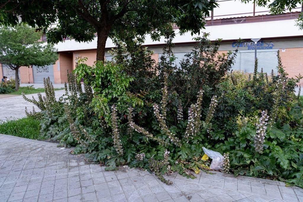 EL PSOE MUESTRA SU PREOCUPACIÓN POR LA DEJADEZ EN EL MANTENIMIENTO DE LAS ZONAS VERDES Y LA FALTA DE LIMPIEZA EN MUCHAS CALLES jardines-1024x682